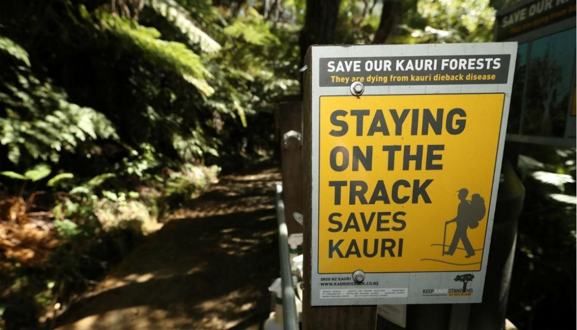 Getty 842352196 kauri track dieback